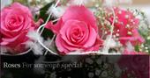 Logo: Ann Fitzpatrick Florist