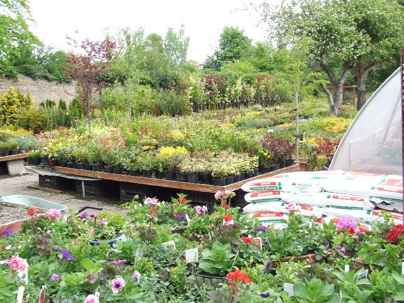 Clondalkin Nurseries Growers Of Hardy Outdoor Shrubs